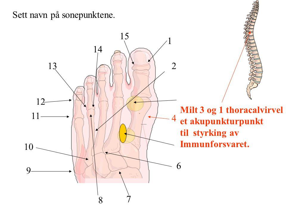 Sett navn på sonepunktene. 1 2 4 6 7 8 9 10 11 12 13 14 15 Milt 3 og 1 thoracalvirvel et akupunkturpunkt til styrking av Immunforsvaret.