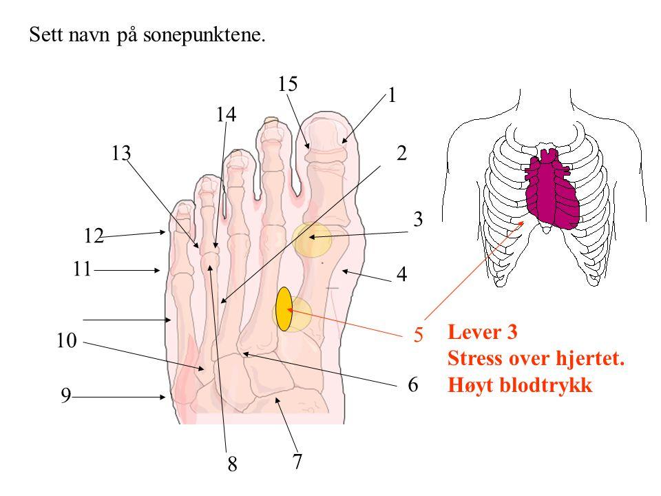 Sett navn på sonepunktene. 1 2 3 4 5 6 7 8 9 10 11 12 13 14 15 Lever 3 Stress over hjertet. Høyt blodtrykk