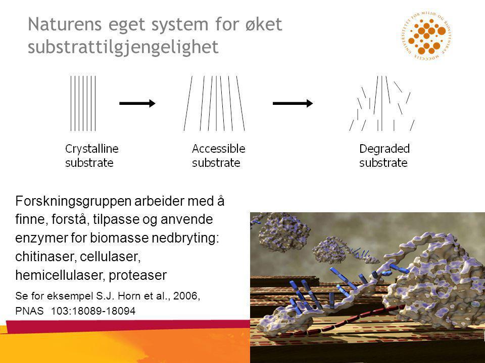Naturens eget system for øket substrattilgjengelighet Forskningsgruppen arbeider med å finne, forstå, tilpasse og anvende enzymer for biomasse nedbryting: chitinaser, cellulaser, hemicellulaser, proteaser Se for eksempel S.J.