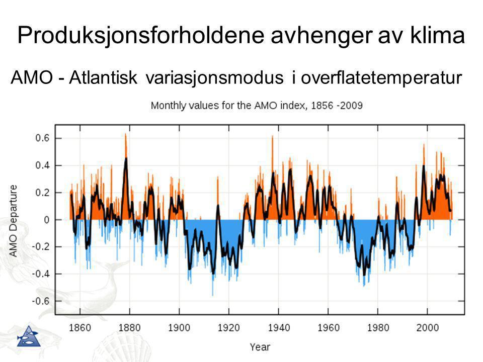 Produksjonsforholdene avhenger av klima AMO - Atlantisk variasjonsmodus i overflatetemperatur