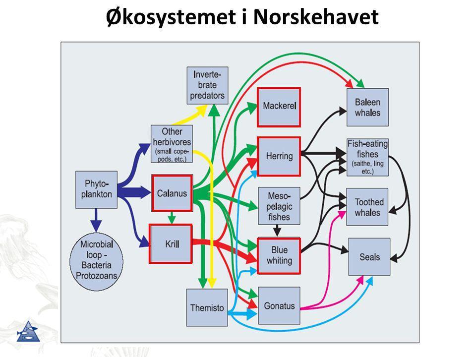 Økosystemet i Norskehavet