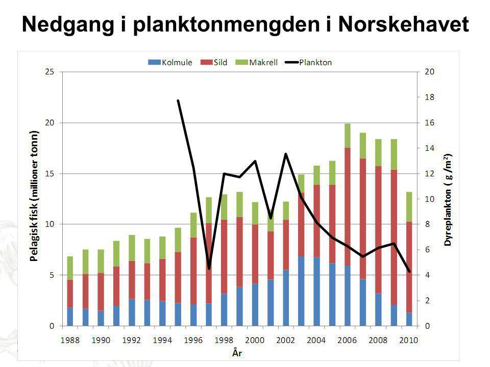 Nedgang i planktonmengden i Norskehavet