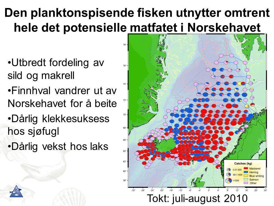 Den planktonspisende fisken utnytter omtrent hele det potensielle matfatet i Norskehavet •Utbredt fordeling av sild og makrell •Finnhval vandrer ut av