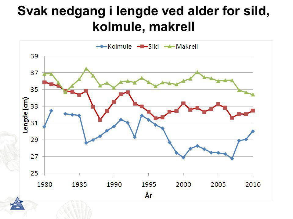 Svak nedgang i lengde ved alder for sild, kolmule, makrell