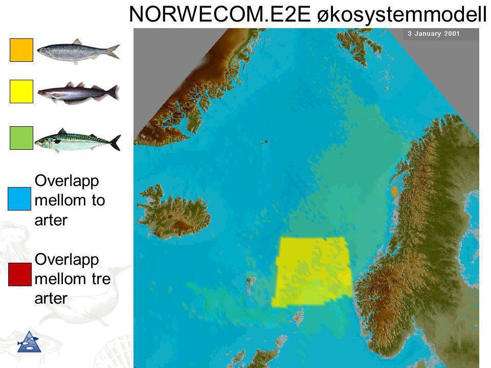 Overlapp mellom to arter Overlapp mellom tre arter NORWECOM.E2E økosystemmodell