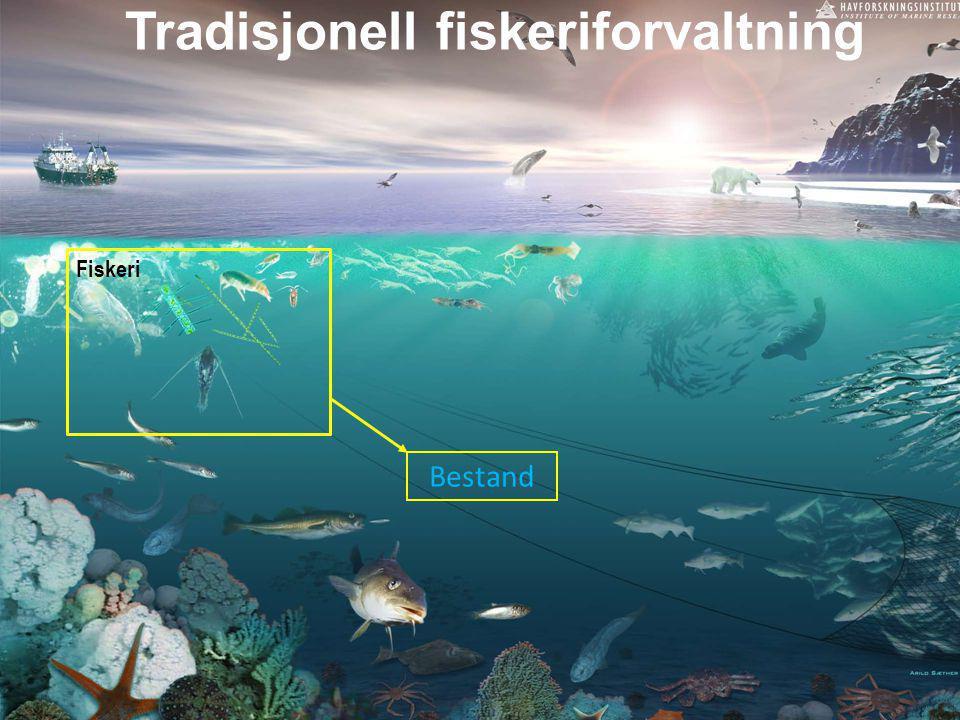 Tradisjonell fiskeriforvaltning Bestand Fiskeri