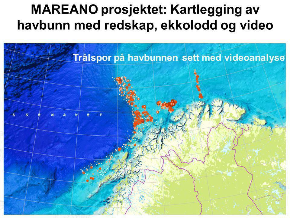 MAREANO prosjektet: Kartlegging av havbunn med redskap, ekkolodd og video Trålspor på havbunnen sett med videoanalyse
