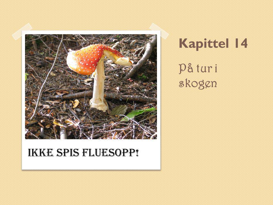 Kapittel 14 På tur i skogen Ikke spis fluesopp!