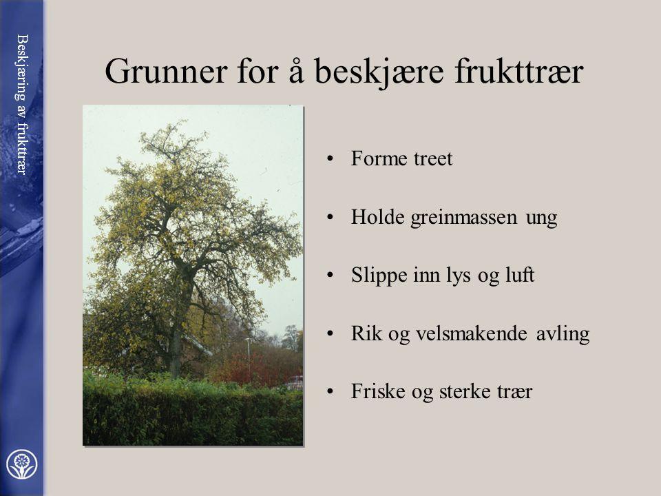 BESKJÆRING AV FRUKTTRÆR av Gustav Redalen Fagsjef / Professor i hagevitenskap
