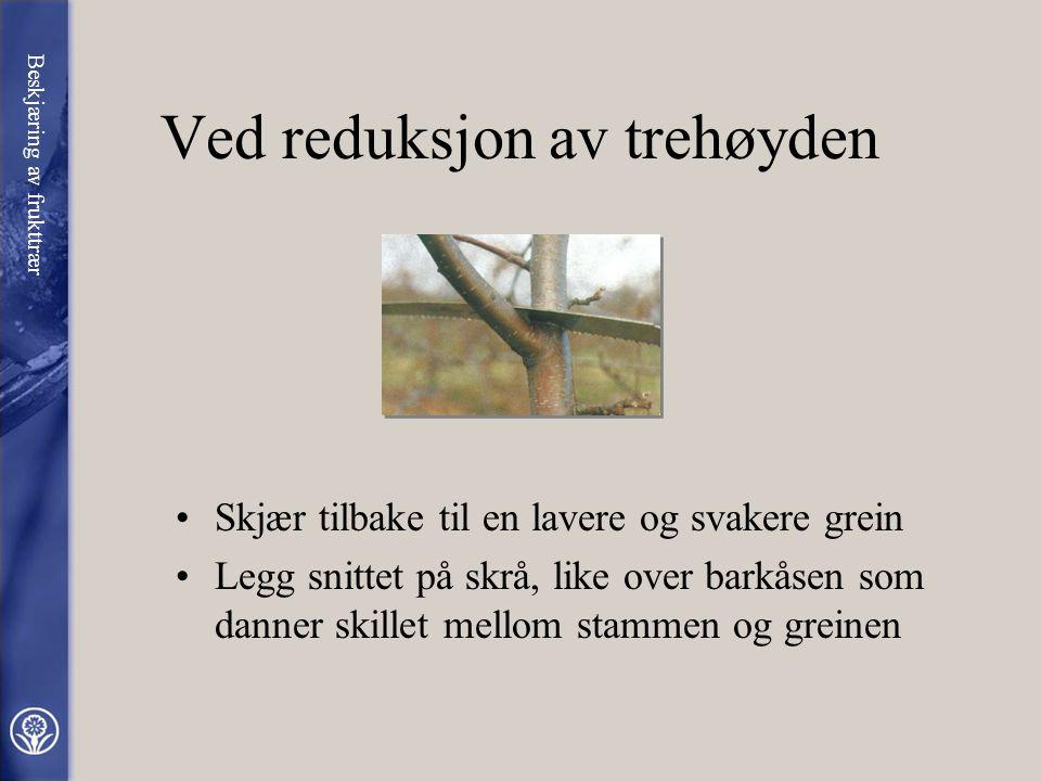 •På store og gamle frukttrær går beskjæringen ut på å fornye greinmassen og slippe lys og luft inn i trekrona. •Noen ganger er det aktuelt å redusere