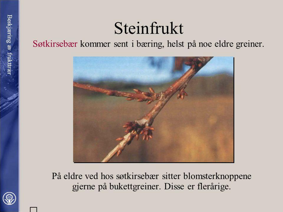 Viktige forskjeller på steinfrukt og kjernefrukt Kjernefrukt (epler og pærer) har blandede knopper, dvs. at blomsterknoppene inneholder anlegg til båd