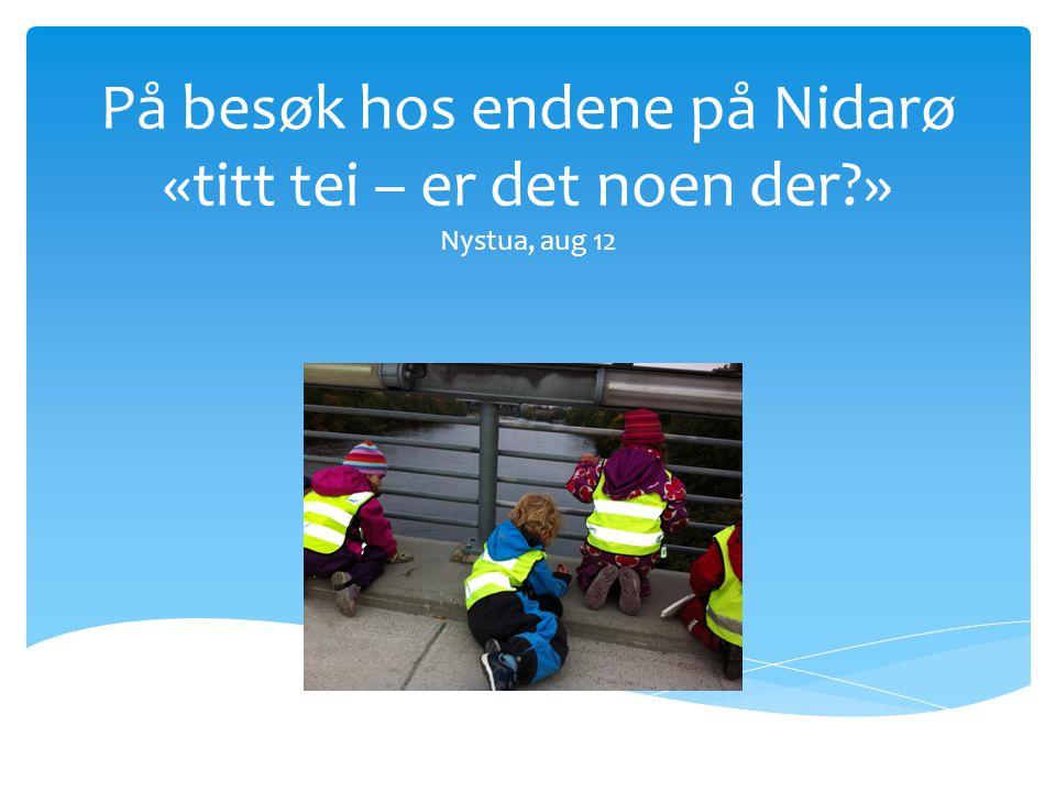 På besøk hos endene på Nidarø «titt tei – er det noen der » Nystua, aug 12