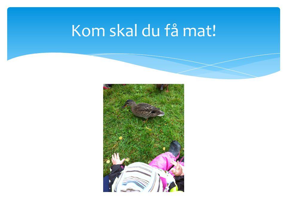  Tur til Nidelven   Nystuas barn var på tur i dag til Nidelven for å mate endene,  vennene til Ole Jakop.