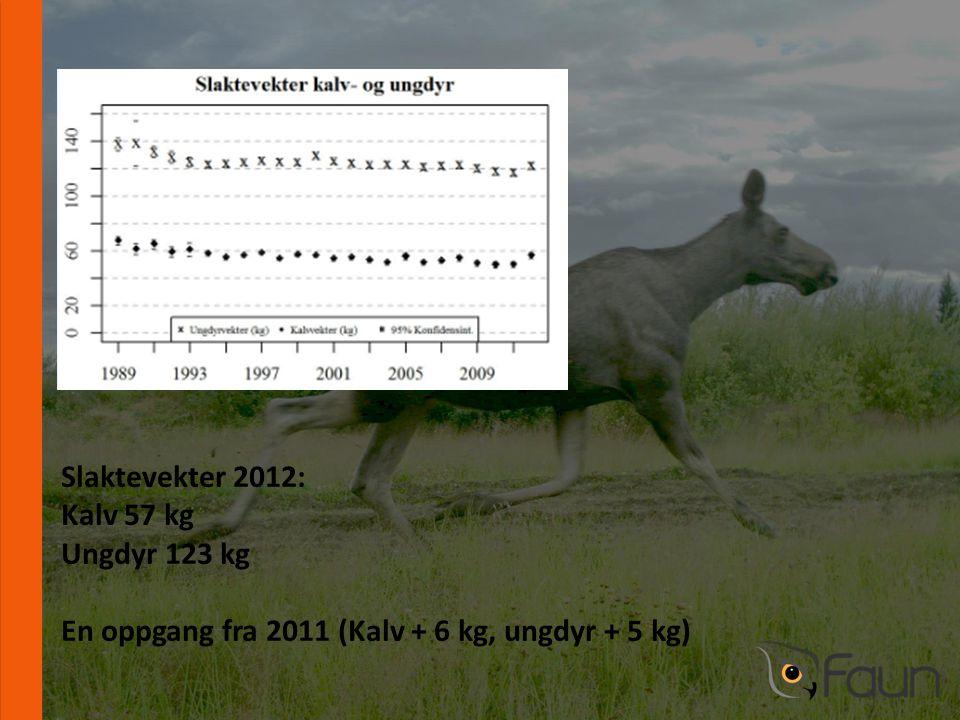 www.fnat.no Slaktevekter 2012: Kalv 57 kg Ungdyr 123 kg En oppgang fra 2011 (Kalv + 6 kg, ungdyr + 5 kg)