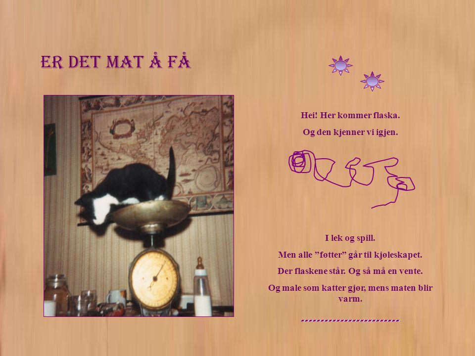 Alle må hjelpe til Einar har grepet på det.Legg merke til hvor fint kattungen holder flaska.