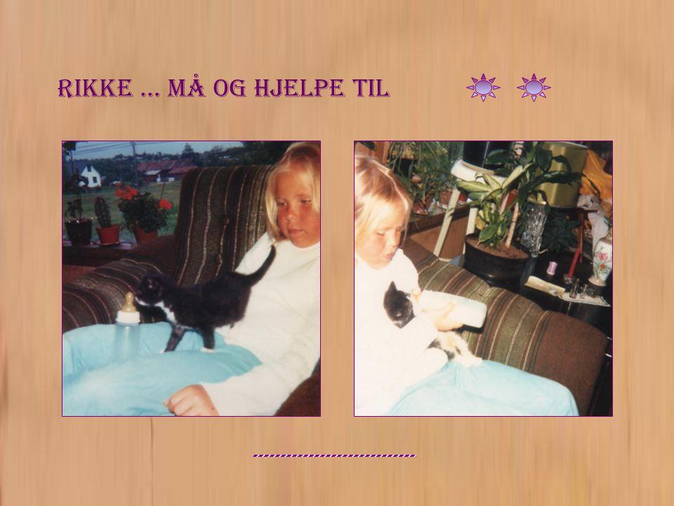 Brysom katt Rikke … ikke alltid like tålmodig