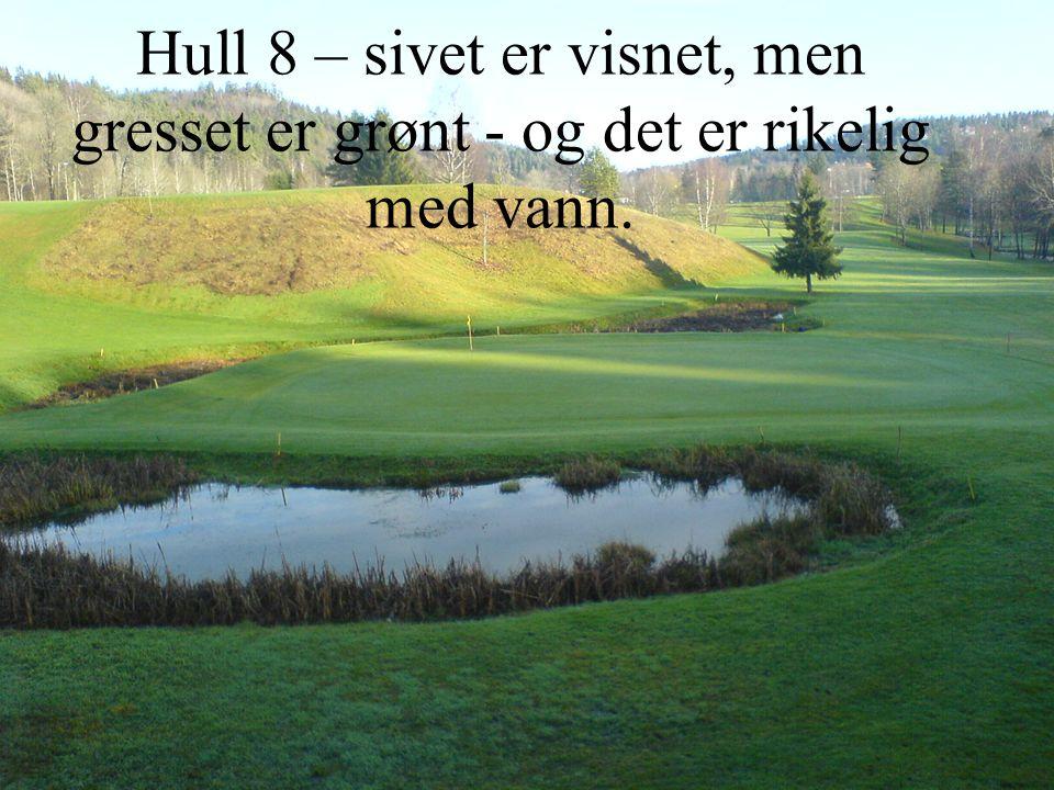 Hull 8 – sivet er visnet, men gresset er grønt - og det er rikelig med vann.