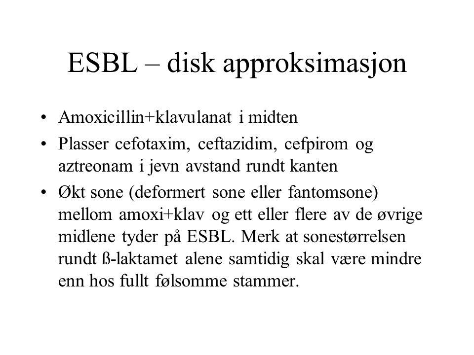 ESBL – disk approksimasjon •Amoxicillin+klavulanat i midten •Plasser cefotaxim, ceftazidim, cefpirom og aztreonam i jevn avstand rundt kanten •Økt son