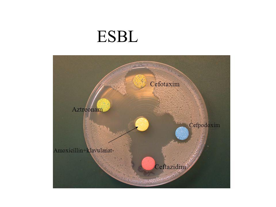ESBL Cefpodoxim Ceftazidim Aztreonam Cefotaxim Amoxicillin+klavulanat