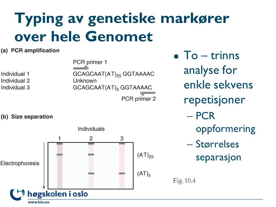 Typing av genetiske markører over hele Genomet l To – trinns analyse for enkle sekvens repetisjoner –PCR oppformering –Størrelses separasjon Fig. 10.4
