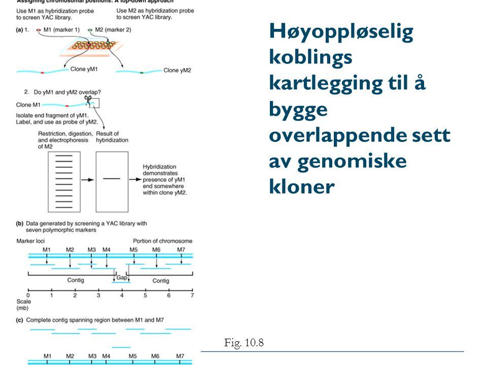 Høyoppløselig koblings kartlegging til å bygge overlappende sett av genomiske kloner Fig. 10.8
