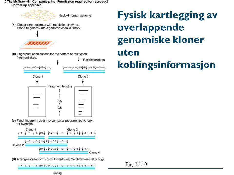 Fysisk kartlegging av overlappende genomiske kloner uten koblingsinformasjon Fig. 10.10