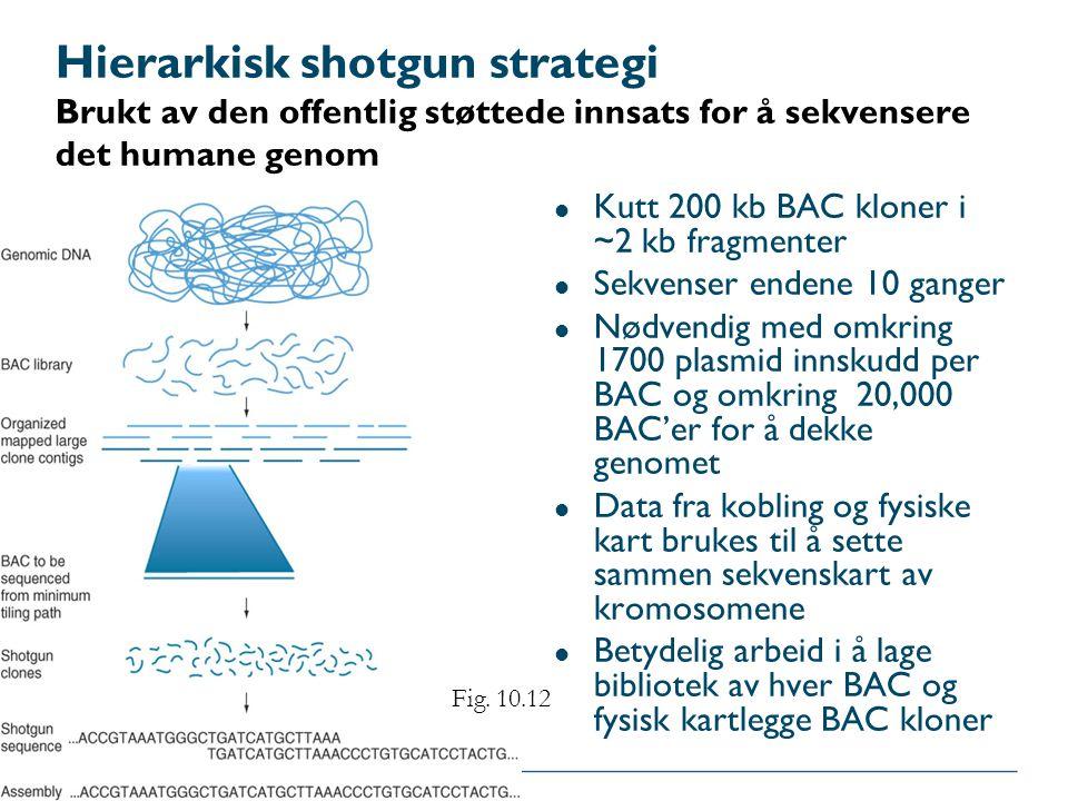 Hierarkisk shotgun strategi Brukt av den offentlig støttede innsats for å sekvensere det humane genom l Kutt 200 kb BAC kloner i ~2 kb fragmenter l Se