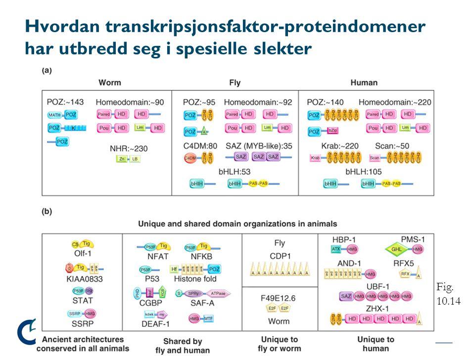 Hvordan transkripsjonsfaktor-proteindomener har utbredd seg i spesielle slekter Fig. 10.14