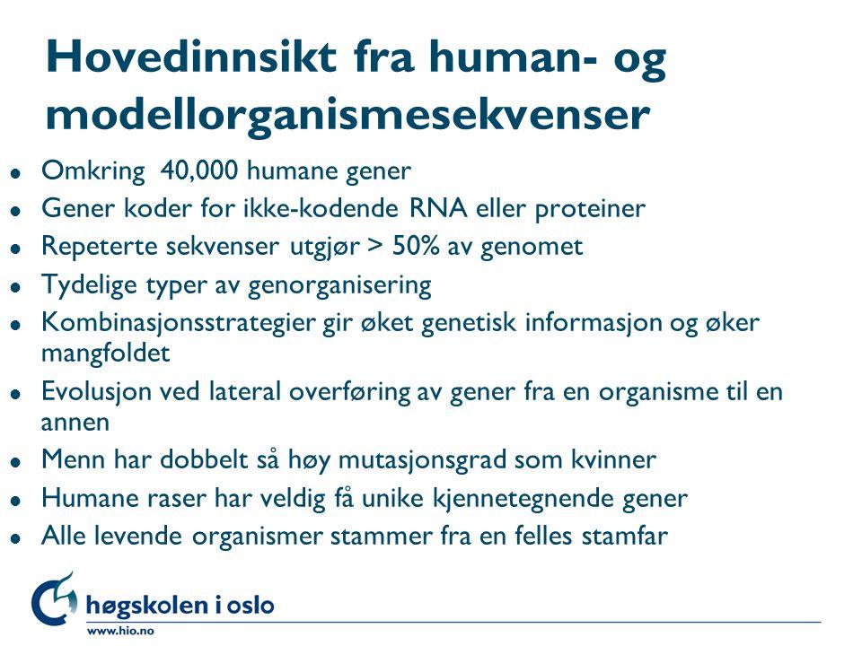 Hovedinnsikt fra human- og modellorganismesekvenser l Omkring 40,000 humane gener l Gener koder for ikke-kodende RNA eller proteiner l Repeterte sekve