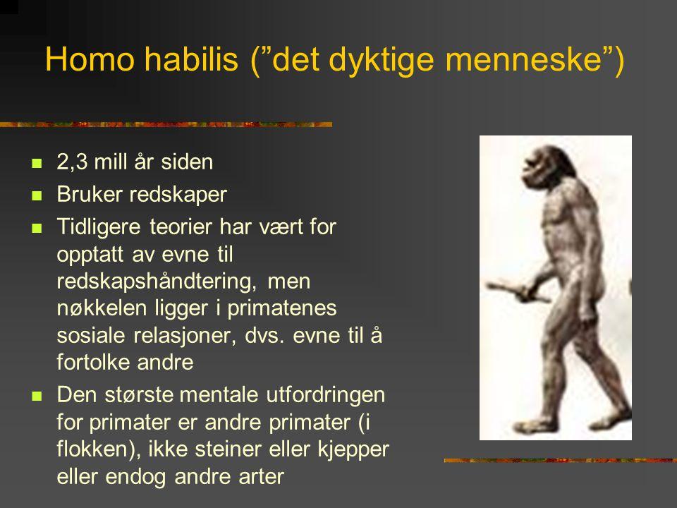 """Homo habilis (""""det dyktige menneske"""")  2,3 mill år siden  Bruker redskaper  Tidligere teorier har vært for opptatt av evne til redskapshåndtering,"""