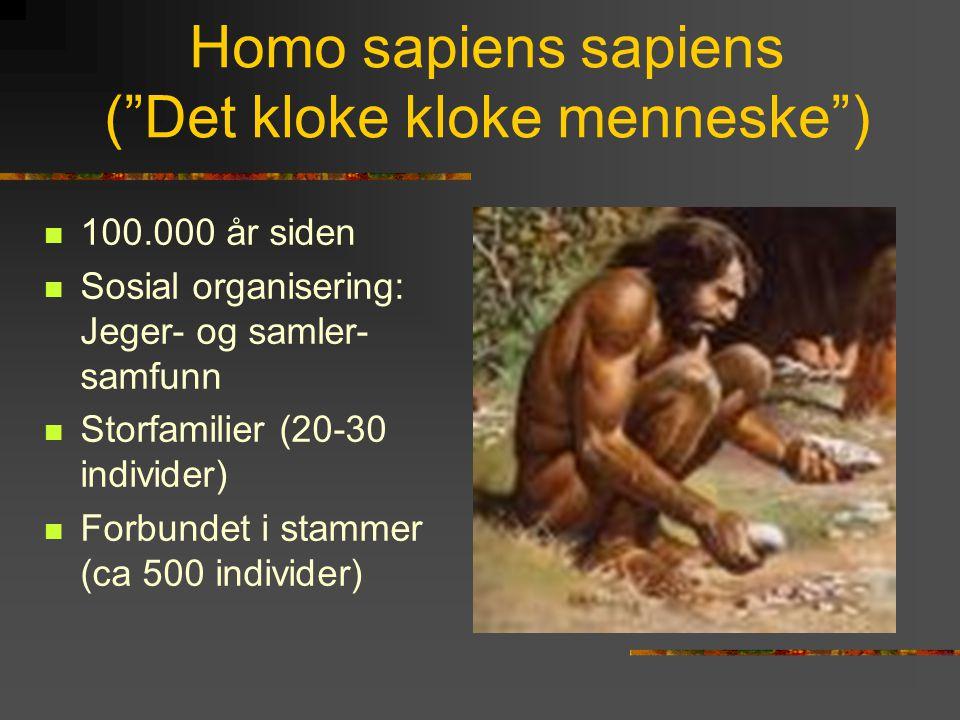 """Homo sapiens sapiens (""""Det kloke kloke menneske"""")  100.000 år siden  Sosial organisering: Jeger- og samler- samfunn  Storfamilier (20-30 individer)"""