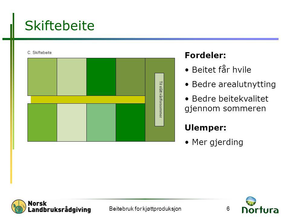 Beitebruk for kjøttproduksjon6 Skiftebeite Fordeler: • Beitet får hvile • Bedre arealutnytting • Bedre beitekvalitet gjennom sommeren Ulemper: • Mer g