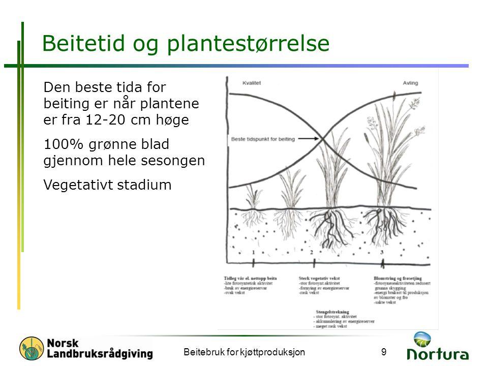 Beitetid og plantestørrelse Beitebruk for kjøttproduksjon9 Den beste tida for beiting er når plantene er fra 12-20 cm høge 100% grønne blad gjennom he