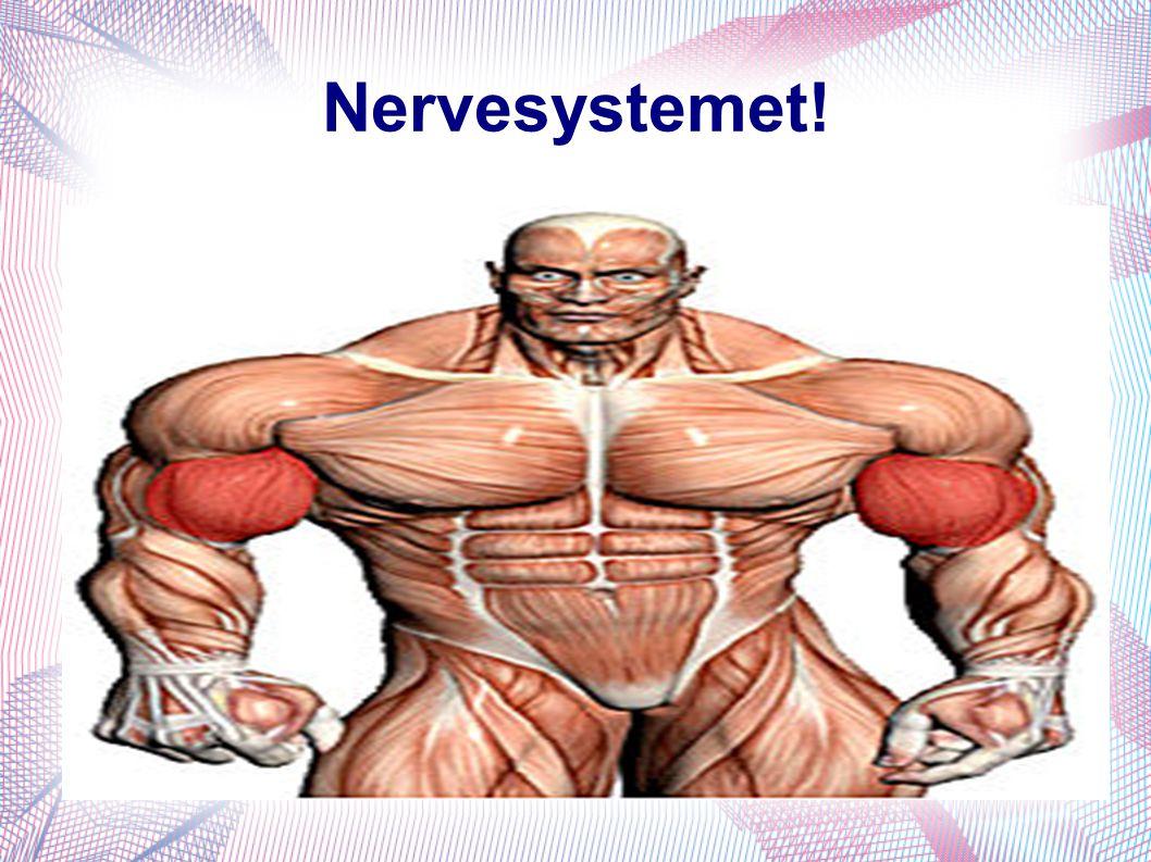 Nervesystemet!