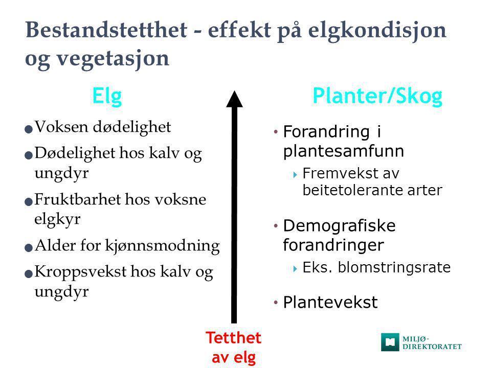 Bestandstetthet - effekt på elgkondisjon og vegetasjon  Voksen dødelighet  Dødelighet hos kalv og ungdyr  Fruktbarhet hos voksne elgkyr  Alder for