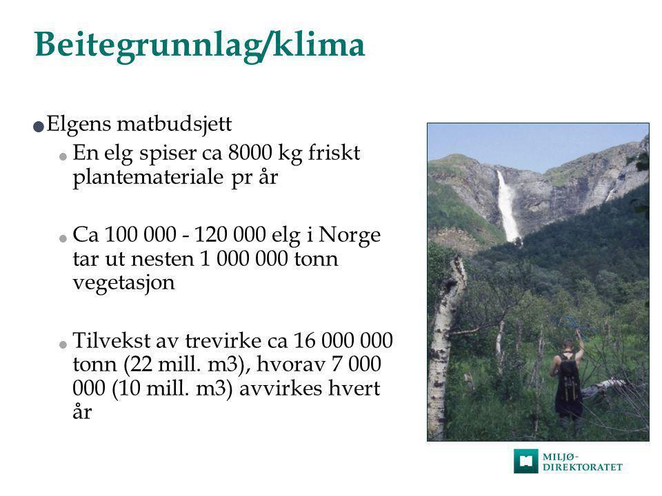 Beitegrunnlag/klima  Elgens matbudsjett  En elg spiser ca 8000 kg friskt plantemateriale pr år  Ca 100 000 - 120 000 elg i Norge tar ut nesten 1 00