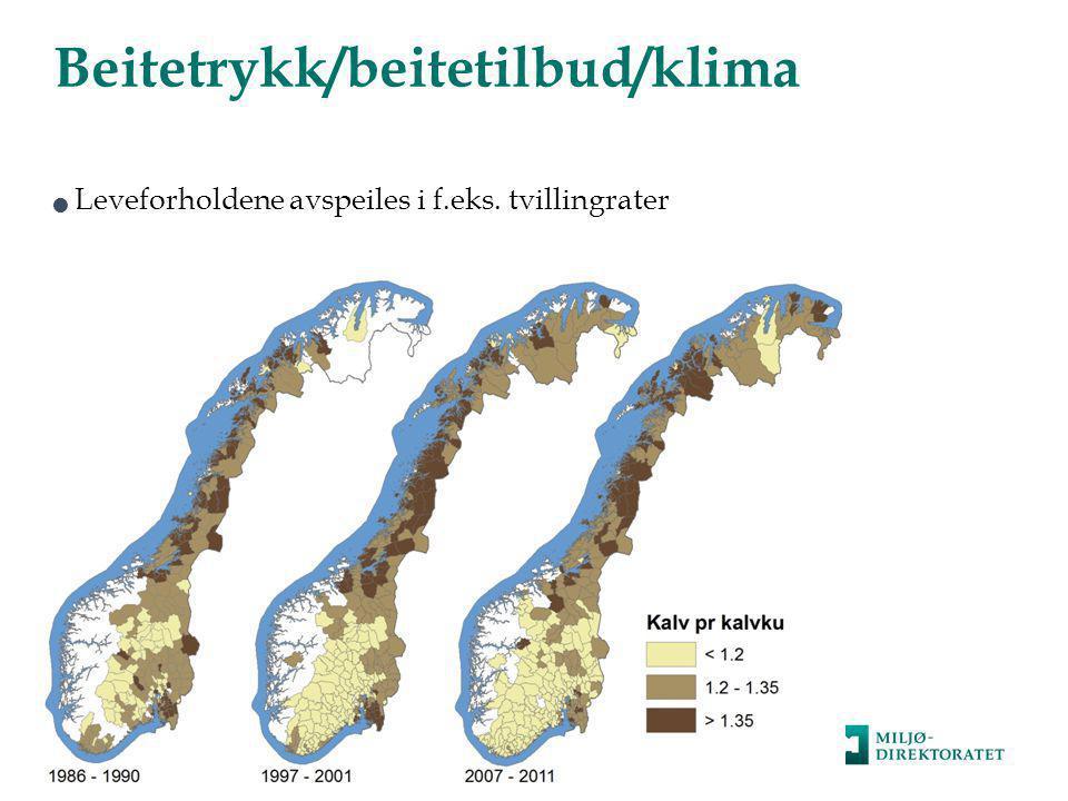 Beitetrykk/beitetilbud/klima  Leveforholdene avspeiles i f.eks. tvillingrater