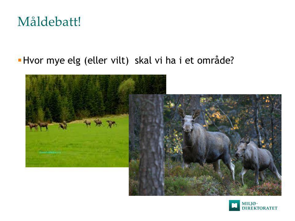 Måldebatt!  Hvor mye elg (eller vilt) skal vi ha i et område? J T Solheim