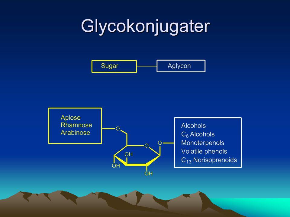 Glycokonjugater