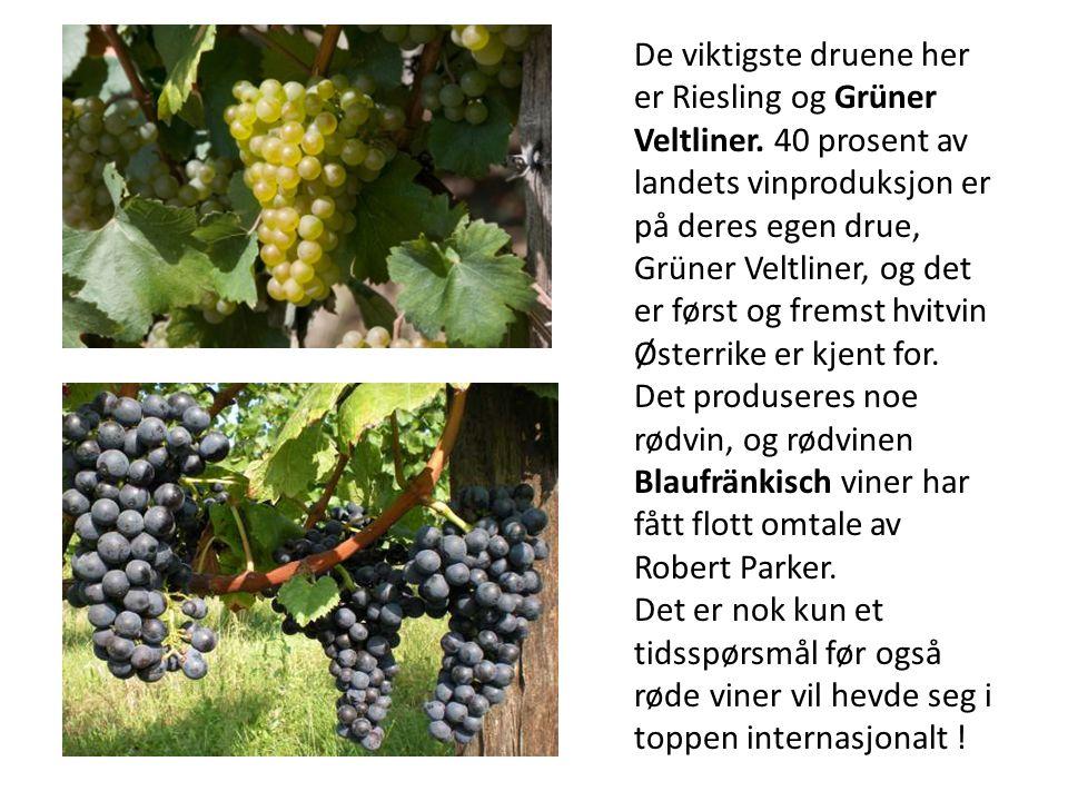 De viktigste druene her er Riesling og Grüner Veltliner. 40 prosent av landets vinproduksjon er på deres egen drue, Grüner Veltliner, og det er først