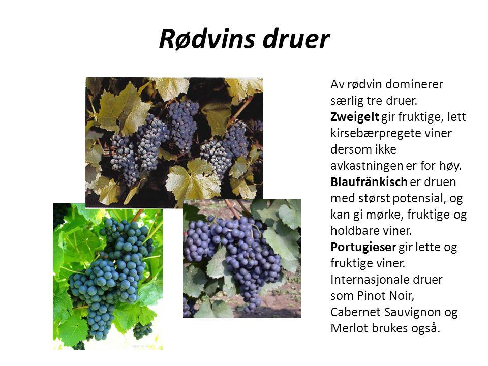 Av rødvin dominerer særlig tre druer. Zweigelt gir fruktige, lett kirsebærpregete viner dersom ikke avkastningen er for høy. Blaufränkisch er druen me