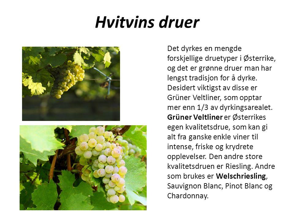 Det dyrkes en mengde forskjellige druetyper i Østerrike, og det er grønne druer man har lengst tradisjon for å dyrke. Desidert viktigst av disse er Gr