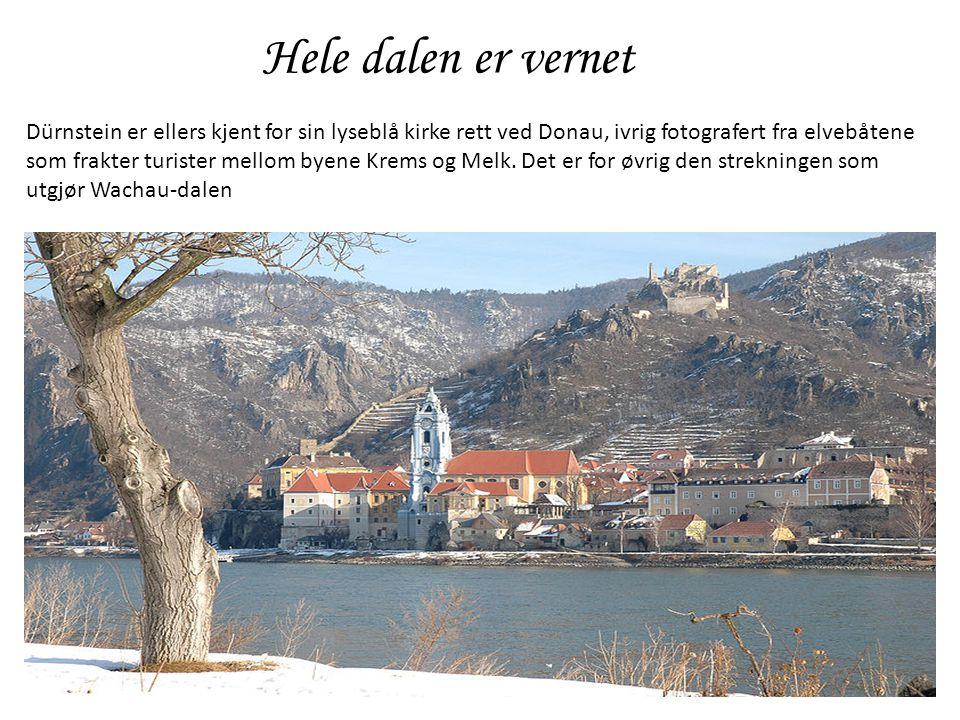 Hele dalen er vernet Dürnstein er ellers kjent for sin lyseblå kirke rett ved Donau, ivrig fotografert fra elvebåtene som frakter turister mellom byen
