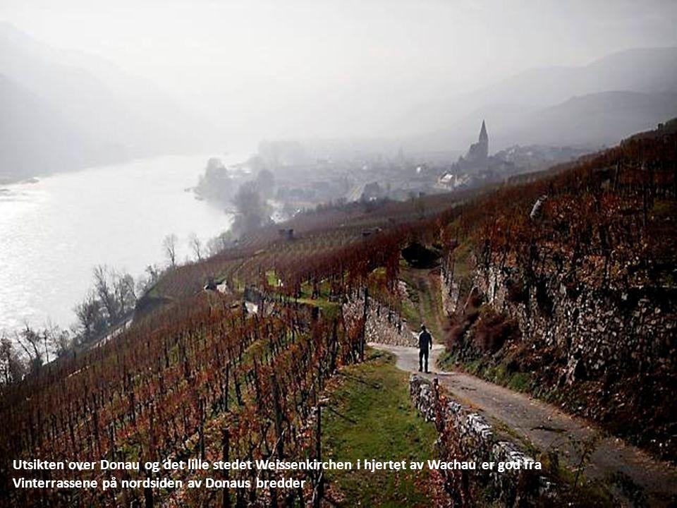 Utsikten over Donau og det lille stedet Weissenkirchen i hjertet av Wachau er god fra Vinterrassene på nordsiden av Donaus bredder