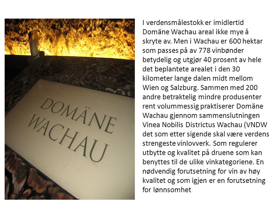 I verdensmålestokk er imidlertid Domäne Wachau areal ikke mye å skryte av. Men i Wachau er 600 hektar som passes på av 778 vinbønder betydelig og utgj