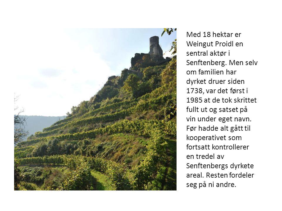 Med 18 hektar er Weingut Proidl en sentral aktør i Senftenberg. Men selv om familien har dyrket druer siden 1738, var det først i 1985 at de tok skrit