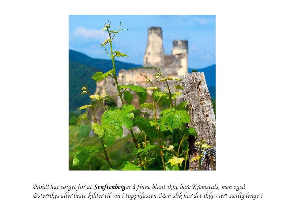 Proidl har sørget for at Senftenberg er å finne blant ikke bare Kremstals, men også Østerrikes aller beste kilder til vin i toppklassen. Men slik har