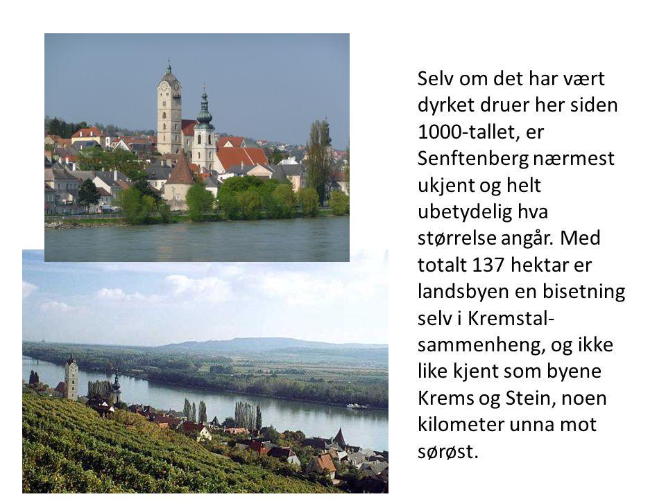 Selv om det har vært dyrket druer her siden 1000-tallet, er Senftenberg nærmest ukjent og helt ubetydelig hva størrelse angår. Med totalt 137 hektar e