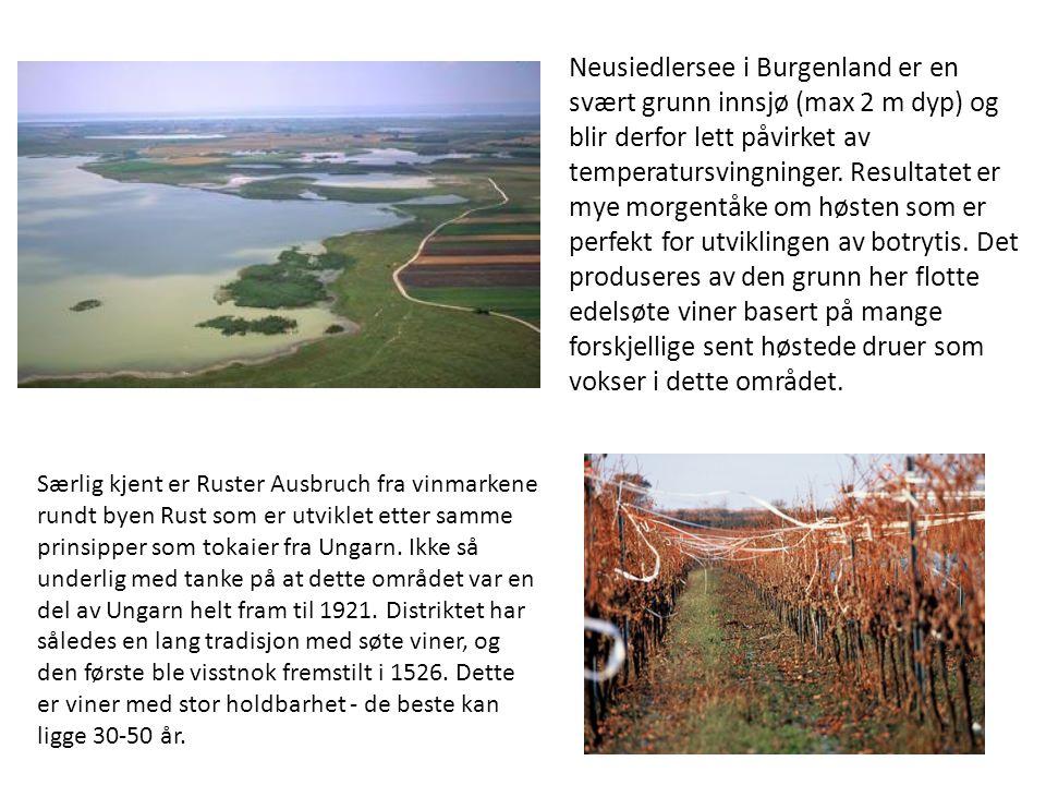 Neusiedlersee i Burgenland er en svært grunn innsjø (max 2 m dyp) og blir derfor lett påvirket av temperatursvingninger. Resultatet er mye morgentåke