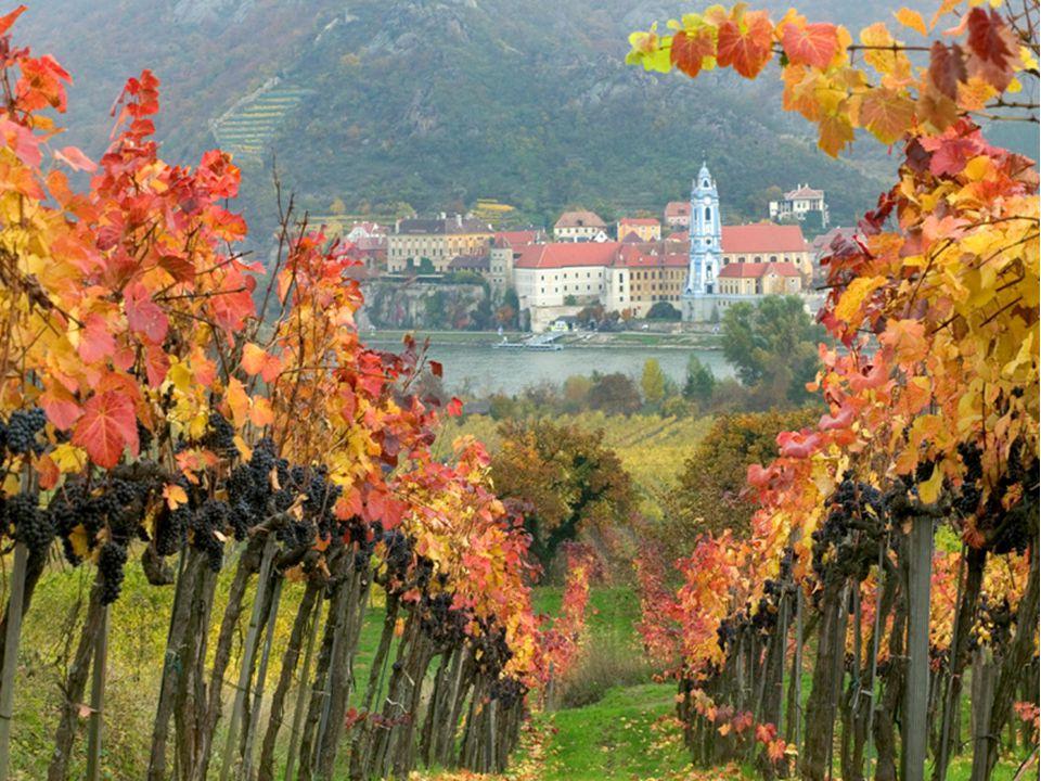 Hele dalen er vernet Dürnstein er ellers kjent for sin lyseblå kirke rett ved Donau, ivrig fotografert fra elvebåtene som frakter turister mellom byene Krems og Melk.